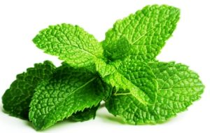 peppermint for hemorrhoids